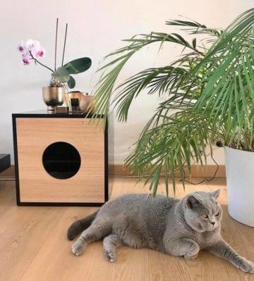Dandy cabinet - Dandy Cat